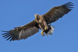 eagle-1753002_1920